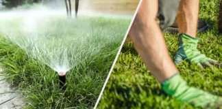 Укладка рулонного газона – критерии выбор